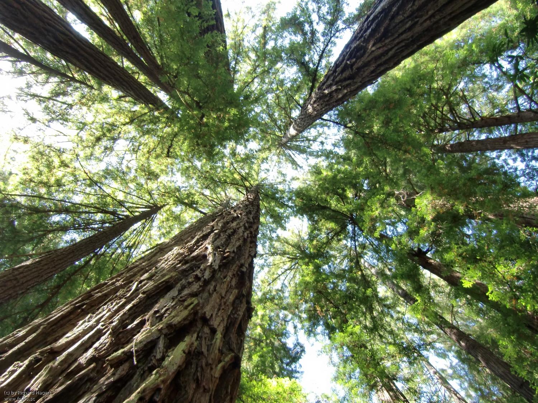 Waldinvestments: Ein gewinnbringender Beitrag zur Umwelt?