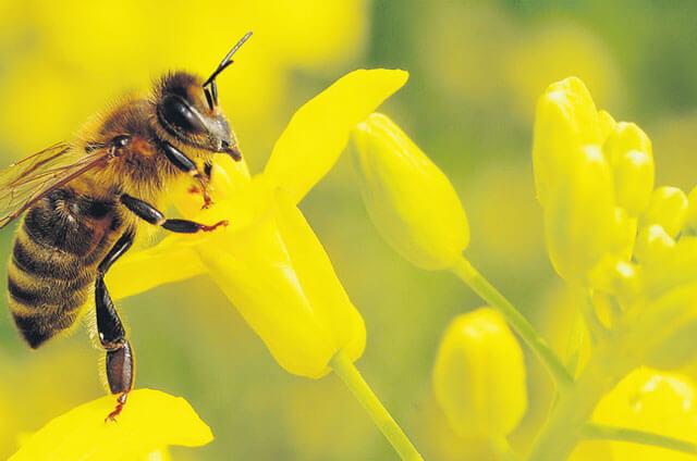 Natur in Not: Wer rettet unsere Bienen vor dem Aussterben?