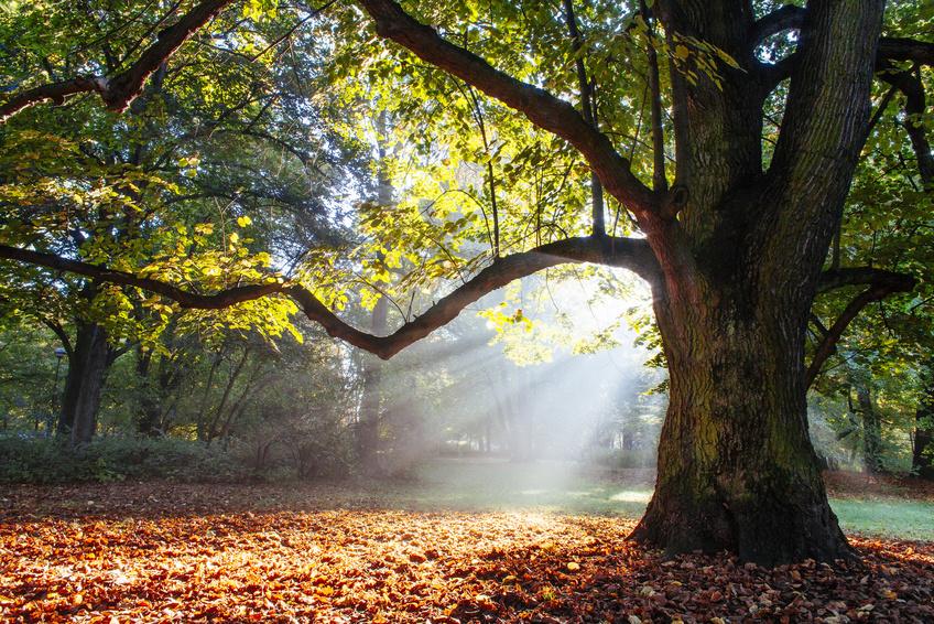 Die Antwort auf den Klimawandel könnten Bäume sein
