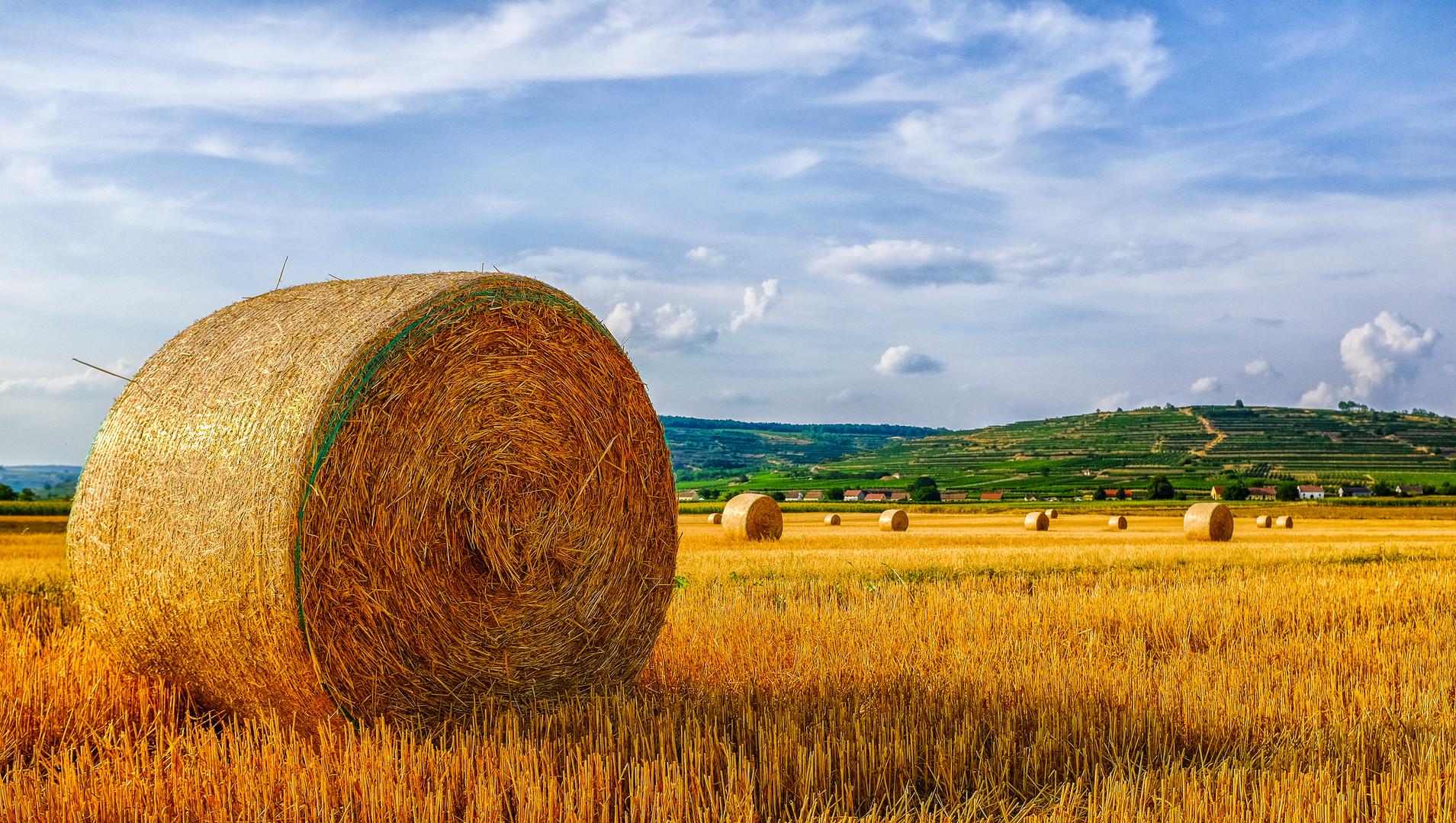 Kaum Heu: Futterkrise bei Tierhaltung und Landwirtschaft