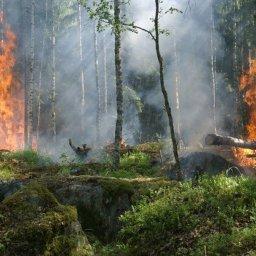 Katastrophale Folgen der schwersten Brände im Regenwald seit 2007