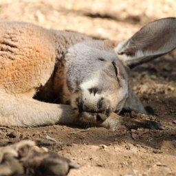 Corona in Australien: Der strengste Lockdown der Welt ist beendet