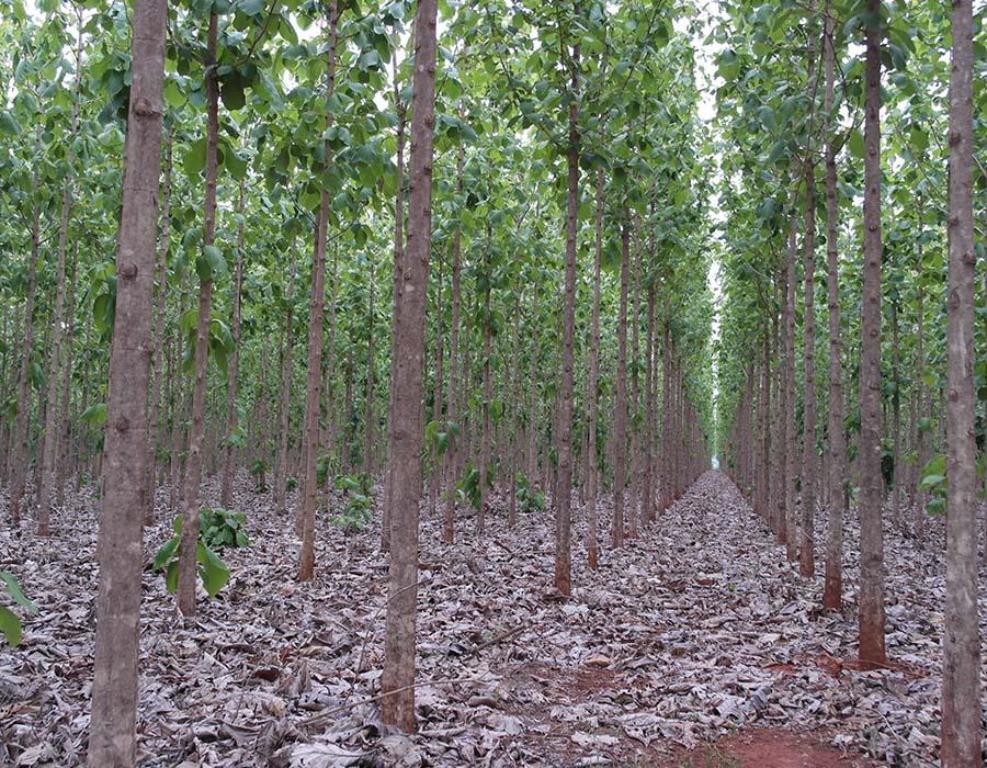 ShareWood Switzerland AG: Bauminvestments für Anleger mit Weitblick