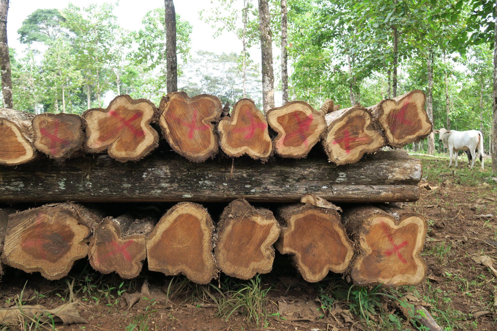 Wieviel Nachhaltigkeit steckt im Angebot der Life Forestry AG?